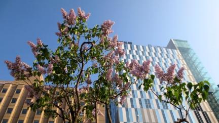designKULTUR - Sapporo 2013 - Buildings - 1