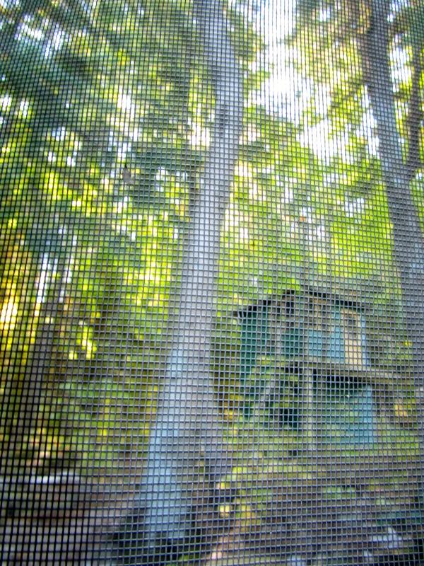 designKULTUR – The Plywood Cottage – Autumn – Exterior – 26
